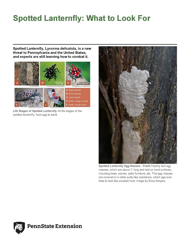 spotted-lanternfly-what-to-look-for_1